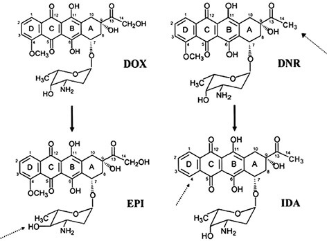 Fig. 1. Chemical structures of main anthracyclines: doxorubicin (adriamycin) — DOX, daunorubicin — DNR, epirubicin — EPI, idarubicin — IDA. The differences between drugs are marked by arrow